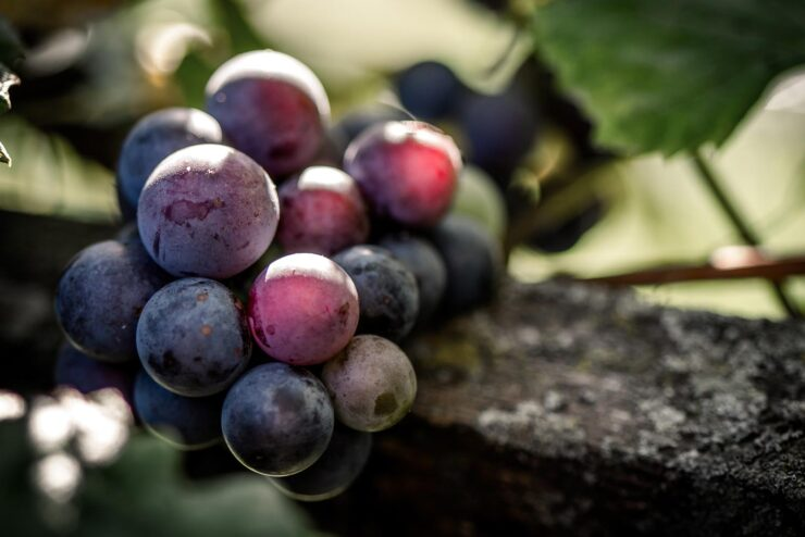 The Spanish grape varieties Scots' favourite destination has to offer